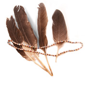 Eagle feather used for ceremonial purposes