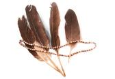 MeWuk Feathers
