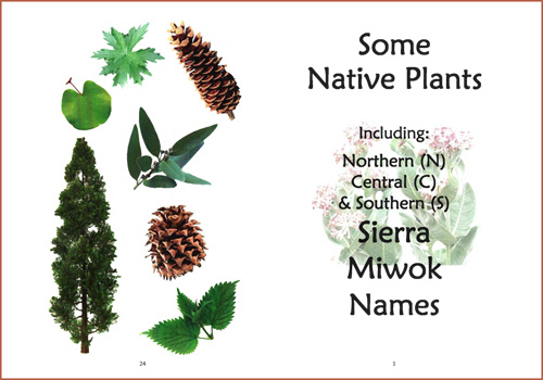 Some Native Plants